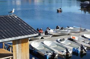 Bootsführerschein Norwegen